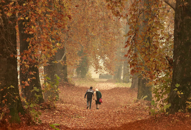 A couple walks amid fallen leaves of Chinar trees in a garden on an autumn day in Srinagar on November 21, 2019. (Photo by Danish Ismail/Reuters)