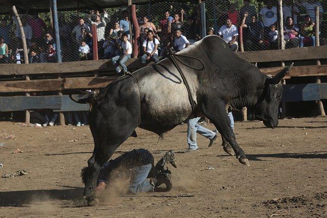 A man gets tossed by a bull during festivities honouring the capital's patron saint Santo Domingo de Guzman in Managua, Nicaragua August 2, 2015. (Photo by Oswaldo Rivas/Reuters)