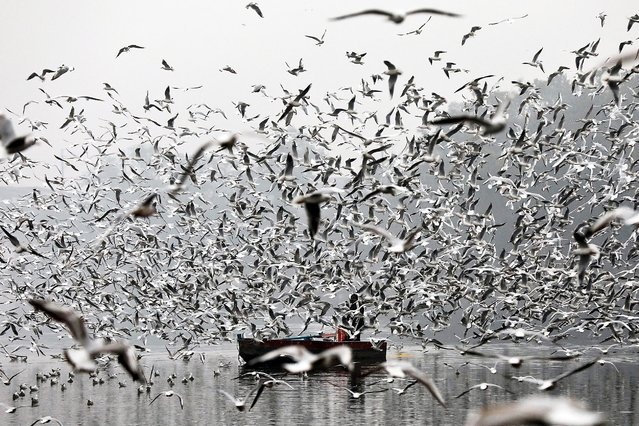 An Indian man in a boat feeds migratory birds on a cold morning near the banks of the Yamuna River in New Delhi, India, 31 December 2019. Migratory birds arrive in New Delhi for the winter season from different parts of India and neighboring countries and are expected to leave in March 2020. (Photo by Rajat Gupta/EPA/EFE)