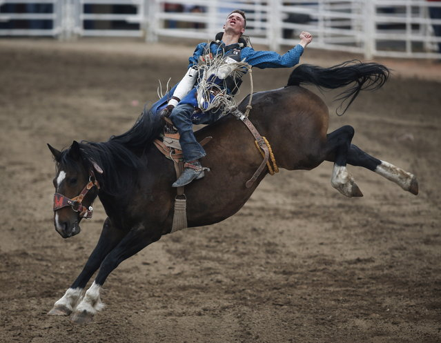 Orin Larsen, of Manitoba, rides during bareback rodeo finals action at the Calgary Stampede in Calgary, Alberta, Sunday, July 16, 2017. (Photo by Jeff McIntosh/The Canadian Press via AP Photo)