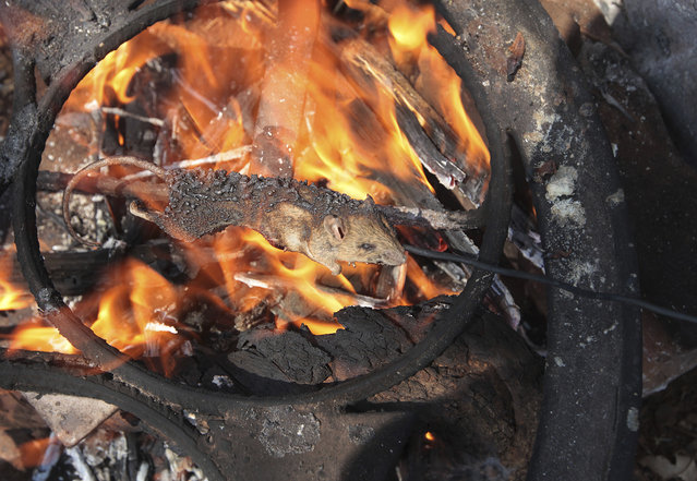 In this photo taken Saturday, September 23, 2017, a mouse is cooked on a fire after being caught in a cornfield in Chidza, Masvingo Province, Zimbabwe. Considered a delicacy, the field mice are hunted in cornfields where they have grown plump on the grains, grass and wild fruits. (Photo by Tsvangirayi Mukwazhi/AP Photo)
