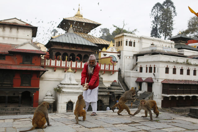 In this Tuesday, March 31, 2020, photo, a Hindu holy man feeds monkeys at Pashupatinath temple, the country's most revered Hindu temple, during the lockdown in Kathmandu, Nepal. Guards, staff and volunteers are making sure animals and birds on the temple grounds don't starve during the country's lockdown, which halted temple visits and stopped the crowds that used to line up to feed the animals. (Photo by Niranjan Shrestha/AP Photo)