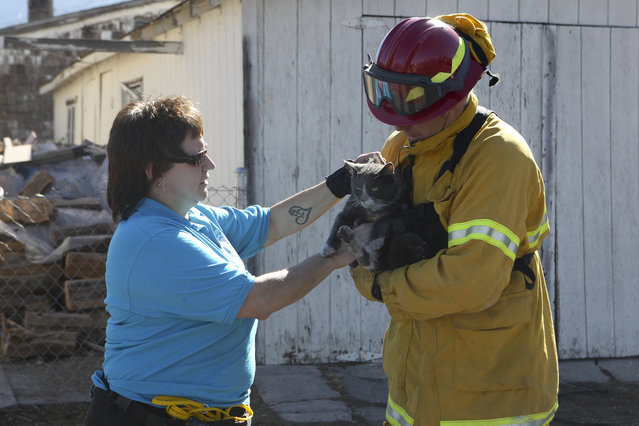 City of Napa firefighter Zach Curren, right, hands off a cat rescued from the fire to Siskiyou Humane Society shelter manager Kim Latos, Tuesday, September 16, 2014, in Weed, Calif. Several shelters are taking in animals rescued from the Boles Fire that burned through the Siskiyou County town on Monday. (Photo by Greg Barnette/AP Photo/The Record Searchlight)