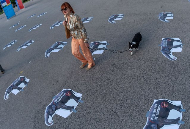 A woman walks her dog through a social distancing marks after the Austrian Freedom Party (FPOe) protest against the governments restrictions against the coronavirus pandemic at Helden square in front the Hofburg palace in Vienna, Austria on May 20, 2020. (Photo by Joe Klamar/AFP Photo)