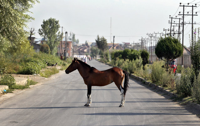 A horse stands in the road in Srinagar as the city remains under curfew following weeks of violence in Kashmir, August 21, 2016. (Photo by Cathal McNaughton/Reuters)