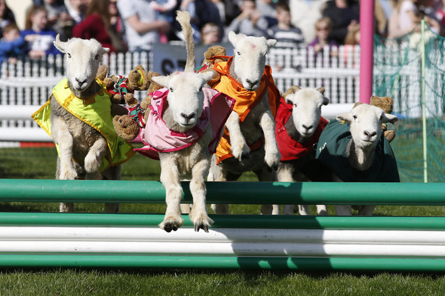 The Lamb National takes place for the racegoers at Ascot Racecourse on April 2, 2017 in Ascot, England. (Photo by Alan Crowhurst/Getty Images)