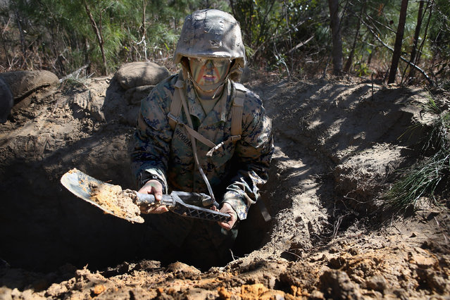 Pfc. Schevlle Woodard from Grand Prairie, Texas digs a fighting hole during Marine Combat Training (MCT) on February 20, 2013 at Camp Lejeune, North Carolina.  Since 1988 all non-infantry enlisted male Marines have been required to complete 29 days of basic combat skills training at MCT after graduating from boot camp. MCT has been required for all enlisted female Marines since 1997. About six percent of enlisted Marines are female.  (Photo by Scott Olson)