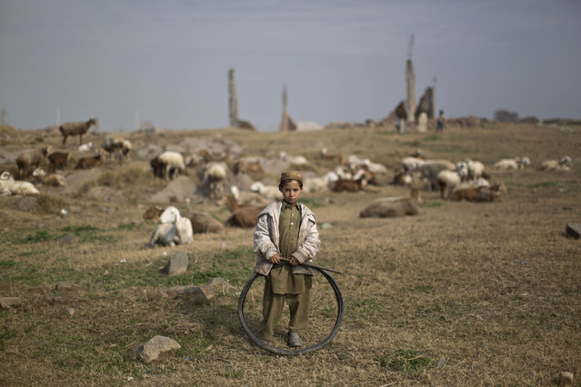 An Afghan refugee boy holds a tire while standing next to his sheep feeding in a field on the outskirts of Islamabad, Pakistan, Saturday, January 24, 2015. (Photo by Muhammed Muheisen/AP Photo)