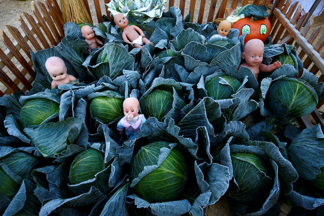 "An installation of cabbage and baby dolls is seen during the annual harvest festival ""Dazhynki – 2018"" in the town of Ivie, Belarus November 17, 2018. (Photo by Vasily Fedosenko/Reuters)"