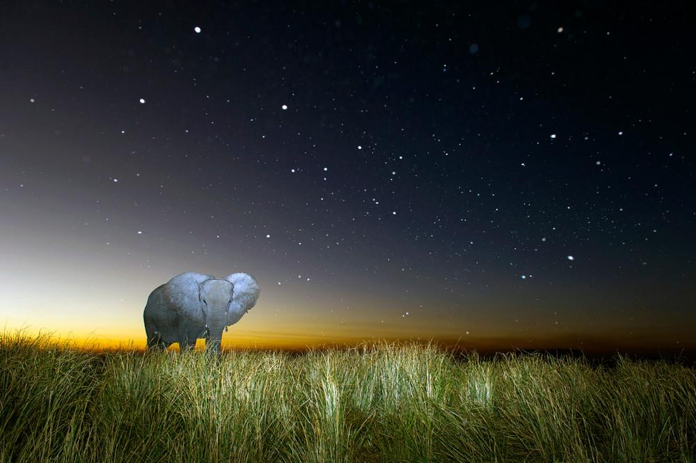 Midnight Safari