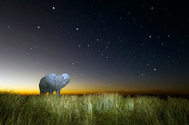 A elepant strolls under the milkyway. (Photo by Brendon Cremer/Caters News)