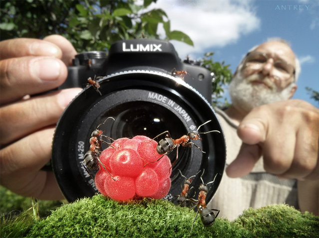 Natural Ant Photography by Andrey Pavlov Part 3