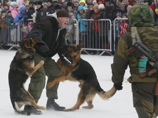 """People watch German shepherd dogs, used in a regional penitentiary camp system, attacking an assistant during the """"Siberian Shield"""" annual military-patriotic festival, part of celebrations for the Defender of the Fatherland Day, in Krasnoyarsk, Russia, February 23, 2016. (Photo by Ilya Naymushin/Reuters)"""