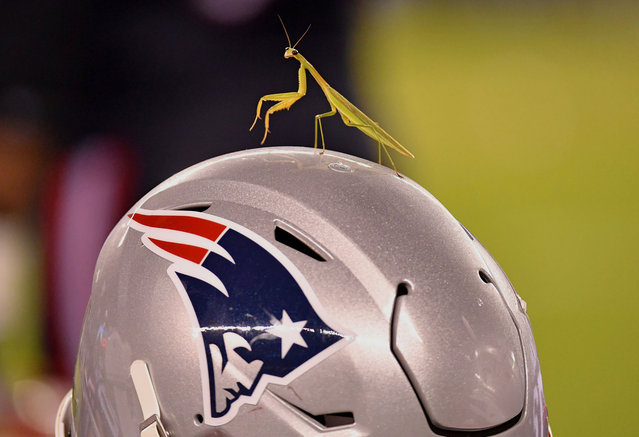 A praying mantis sits atop a New England Patriots helmet on the sidelines against the Philadelphia Eagles during the fourth quarter at Lincoln Financial Field in Philadelphia, Pennsylvania on August 19, 2021. (Photo by Eric Hartline/USA TODAY Sports)