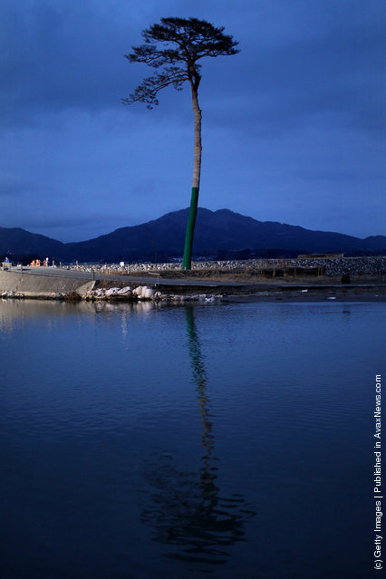 A single pine tree that was left standing after the March 11th tsunami last year, which swept away an entire forest in the city of Rikuzentakata, is seen on March 10, 2012 in Rikuzentakata, Japan