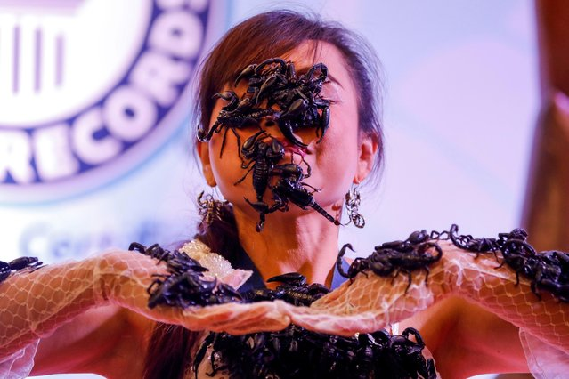 Thailand's Scorpion Queen and Ripley's Ambassador Kanchana Kaetkaew (also spelled Kanjana Ketkaew), poses with dozens of scorpions on her face and body at the Ripley's Believe it or Not museum in Pattaya city, Chonburi province, Thailand, 03 June 2017. (Photo by Diego Azubel/EPA)