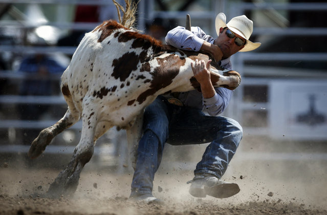 Tyler Waguespack, of Gonzales, La., wins the steer wrestling event during rodeo finals action at the Calgary Stampede in Calgary, Alberta, Sunday, July 16, 2017. (Photo by Jeff McIntosh/The Canadian Press via AP Photo)