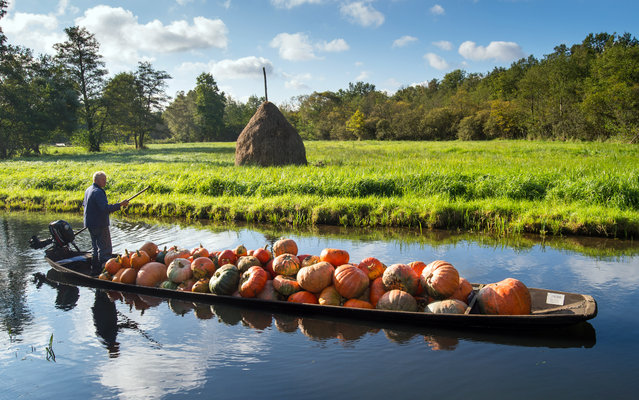 Farmer Harald Wenske drives his boat, loaded with pumpkins, on a so-called Fliess, which is a water vein of the river Spree near the village of Lehde, eastern Germany, Tuesday, September 23, 2014. (Photo by Patrick Pleul/AP Photo/DPA)