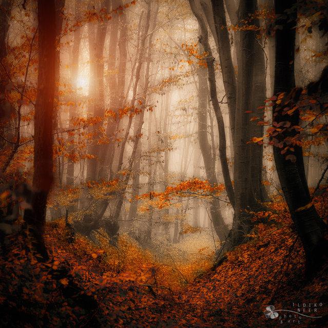 Enchanted path. (Ildiko Neer)
