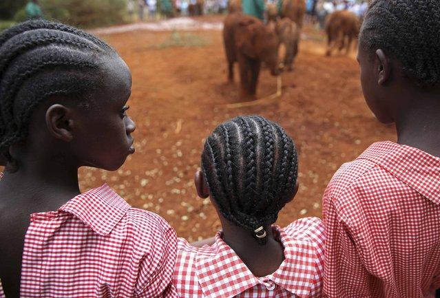 Pupils look at orphaned baby elephants at the David Sheldrick Elephant Orphanage within the Nairobi National Park, near Kenya's capital Nairobi October 15, 2014. (Photo by Goran Tomasevic/Reuters)