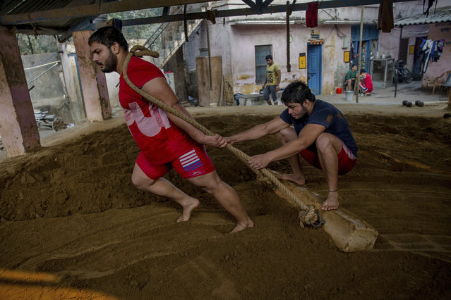In this November 20, 2017 photo, Indian kushti wrestlers prepare the ground in the ring for a training session, at Hanuman Akhada, one of India's oldest akhada at Sabzi Mandi, in New Delhi, India. (Photo by Dar Yasin/AP Photo)