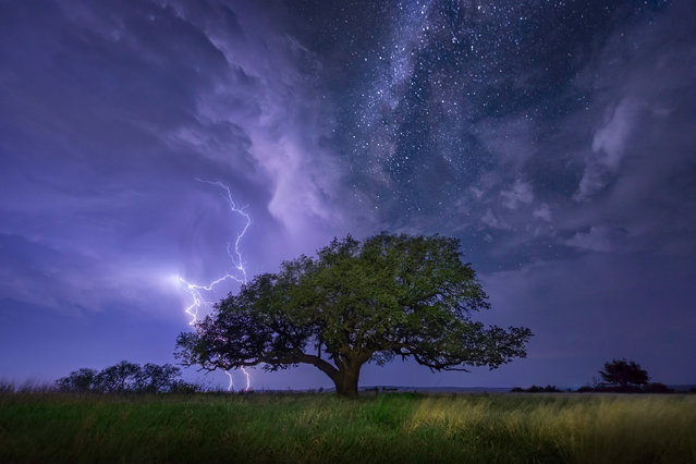 A cloud-to-ground lightning bolt strikes over Albany, Texas as the Milky Way shines above, May 2011. (Photo by Mike Mezeul II/Caters News)