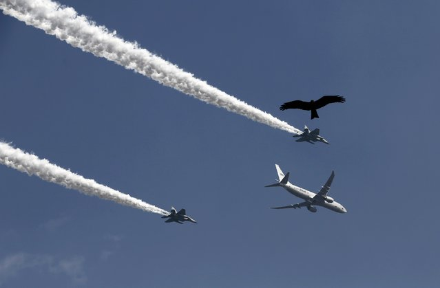 An eagle flies amid contrails from the Indian Air Force aircrafts during a full dress rehearsal for the Republic Day parade in New Delhi January 23, 2015. (Photo by Adnan Abidi/Reuters)