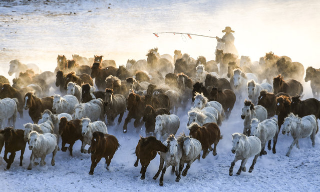 A herdsman drives horses on snow-covered grassland in Hexigten banner of Chifeng city, Inner Mongolia autonomous region on January 5, 2019. (Photo by Peng Yuan/Xinhua News Agency/Barcroft Media)