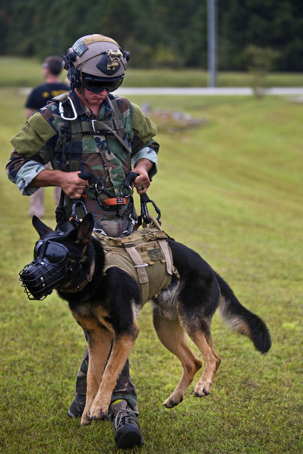 A U.S. Marine with Marine Raider Regiment, carries his multipurpose canine during special patrol insertion/extraction training at Stone Bay, Camp Lejeune, N.C., September 23, 2015. Marine Light Attack Helicopter Squadron 167 Marines flew from Marine Corps Air Station New River to assist MARSOC with the training. (Photo by Lance Cpl. Austin A. Lewis/U.S. Marine Corps)