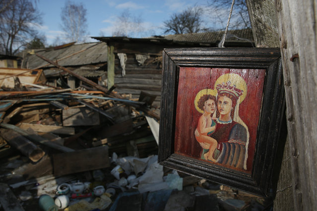 An icon hangs among the ruins of one of the few remaining structures at the site of the raized village of Navilovka on April 4, 2016 near Chachersk, Belarus. Navilovka was among hundreds of villages in Belarus demolished by authorities and the residents evacuated following radiation contamination from the Chernobyl nuclear disaster in 1986. Chachersk, located in south-eastern Belarus, is in a zone designated as still contaminated to varying degrees with Chernobyl radiation, especially caesium-137. (Photo by Sean Gallup/Getty Images)