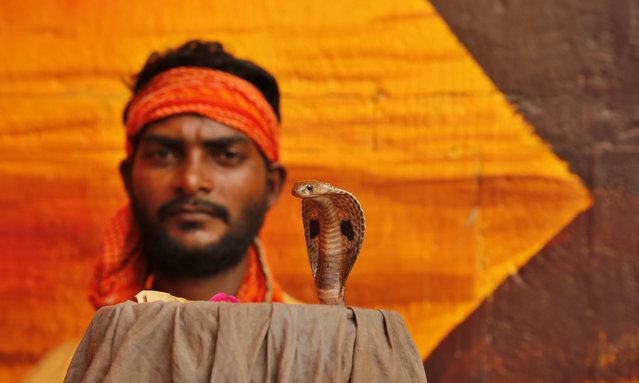 """A man displays a snake to attract alms from Hindu devotees who arrive to worship at a temple during the annual """"Nag Panchami"""" festival, in Prayagraj, India, Monday, August 5, 2019. The festival is dedicated to the worship of snakes. (Photo by Rajesh Kumar Singh/AP Photo)"""