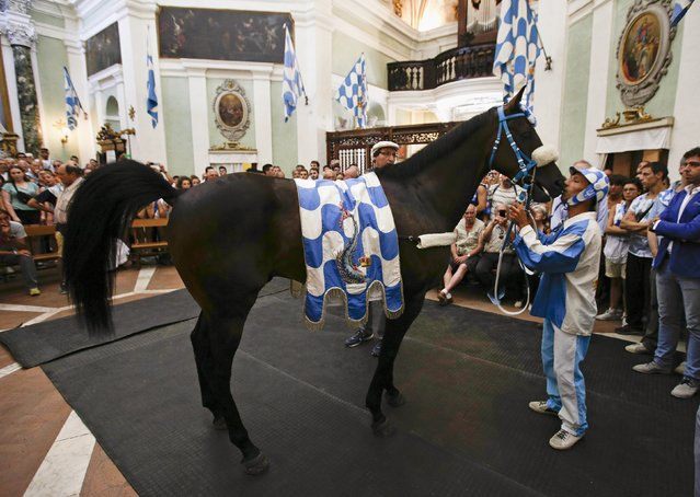 """Onda (sea wave) parish's horse """"Osama Bin"""" is kissed by jokey Alberto Ricceri as he arrives in the church to be blessed before the Palio horse race in Siena July 2, 2015. (Photo by Max Rossi/Reuters)"""
