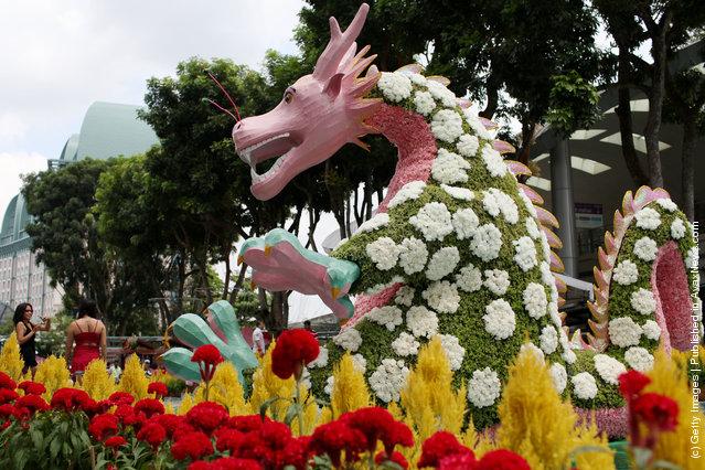 Singapore Sentosa Flower Show In Full Bloom