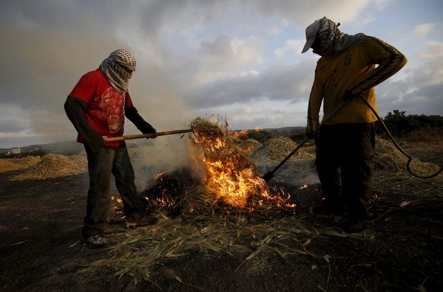 Palestinians burn wheat as part of the process to make frike, in the West Bank city of Jenin May 10, 2015. (Photo by Mohamad Torokman/Reuters)