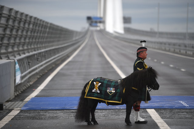 LCpl Cruachan IV, the mascot of the 2nd Battalion The Royal Regiment of Scotland waits on the Queensferry Crossing before the arrival of Queen Elizabeth II, on September 4, 2017 in South Queensferry, Scotland. Scotland's newest road bridge which began construction in 2011, crosses the Firth of Forth near Edinburgh. The crossing is the world's longest three tower cable stayed bridge. (Photo by Jeff J. Mitchell/Getty Images)