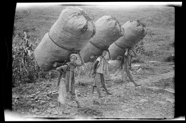 Carrying Tea. China, Qushan, 1917-1919. (Photo by Sidney David Gamble)
