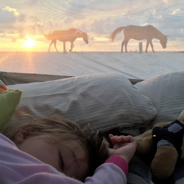 """""""Camping on the beach with my family, woke up at sunrise to take a memorable picture viewing wild horses on the beach while my children slept"""", wrote Darren Nilsen, 43, of Great Falls, Va., of his submission shot on Maryland's Assateague Island. (Photo by Darren Nilsen)"""