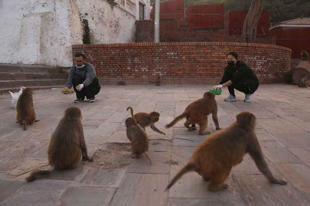 In this Tuesday, March 31, 2020, photo, Nepalese volunteers feed monkeys at Pashupatinath temple, the country's most revered Hindu temple, during the lockdown in Kathmandu, Nepal. (Photo by Niranjan Shrestha/AP Photo)