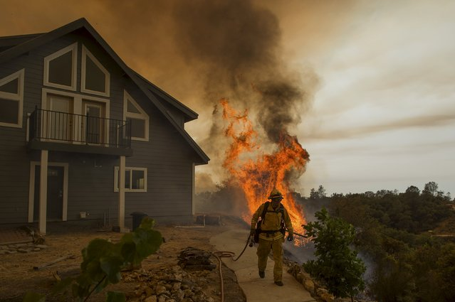 A firefighter works to save a residence as the Butte fire burns in San Andreas, California  September 11, 2015. Evacuation orders were expanded to thousands of homes in northern California's Sierras on Friday as the rapidly spreading wildfire roared for a third day through drought-parched timber and brush, threatening mountain communities near Sacramento. By Friday, the flames had devoured nearly 32,000 acres of rugged terrain. (Photo by Noah Berger/Reuters)