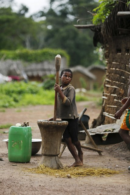 A boy uses a mortar and pestle in a village built inside the protected Gouin-Debe forest in Blolequin department, western Ivory Coast August 17, 2015. (Photo by Luc Gnago/Reuters)