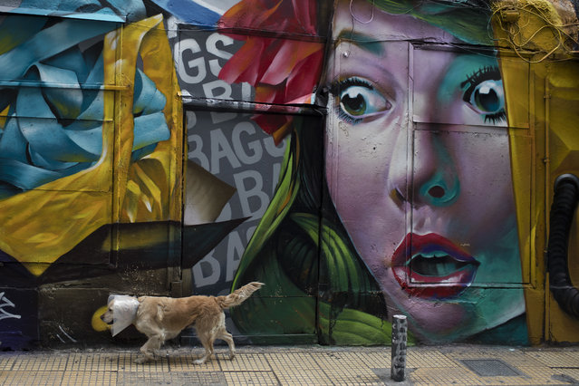 A dog walks past a mural by street artist Alex Martinez outside a shop which sells bags at Psiri area, central Athens, on Thursday, January 25, 2018. (Photo by Petros Giannakouris/AP Photo)