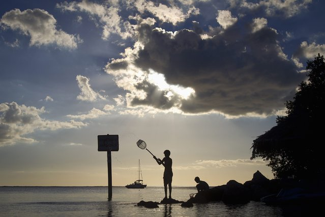 Boys play on rocks with their dip net in Blackwater Sound in Key Largo, Florida, December 7, 2014. (Photo by Carlo Allegri/Reuters)