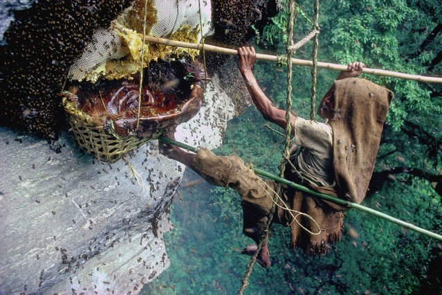 """1990 Visa d'or Feature: Eric Valli & Diane Summers. """"I took this picture while living with the Gurung Honey Hunters in Nepal from 1986-1987, one of my first great adventures in the Himalayan mountains. Seen here is Mani-Lal harvesting the honey of the Apis Dorsata, which make their nests in the cliffs about 2500m high. (Photo by Eric Valli/Diane Summers)"""