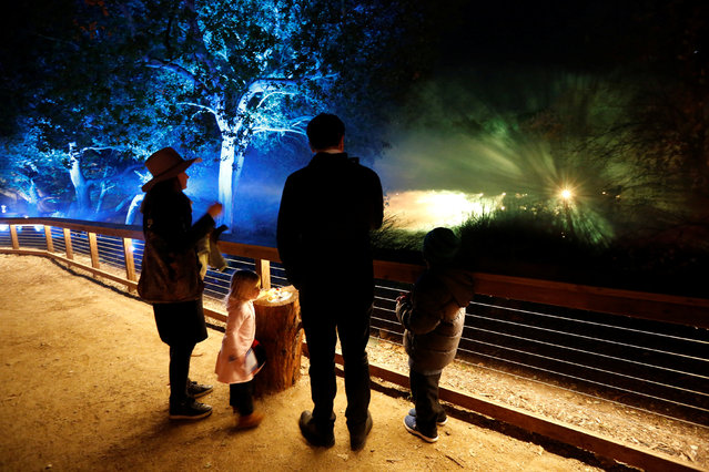 "A child interacts with ""Lightwave Lake"" which is part of the exhibit ""Enchanted: Forest of Light"" at Descanso Gardens in La Canada Flintridge, California U.S., December 9, 2016. (Photo by Mario Anzuoni/Reuters)"