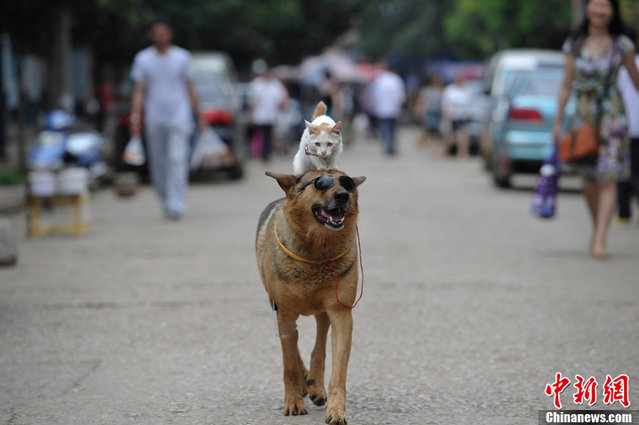 Sweet Couple: Dog And Cat