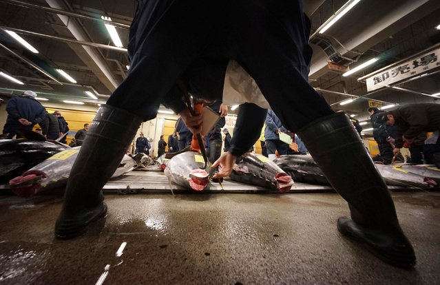 A prospective buyer inspects the quality of fresh tuna fish before the first auction of the year at Tsukiji fish market in Tokyo, early Thursday, January 5, 2017. (Photo by Eugene Hoshiko/AP Photo)
