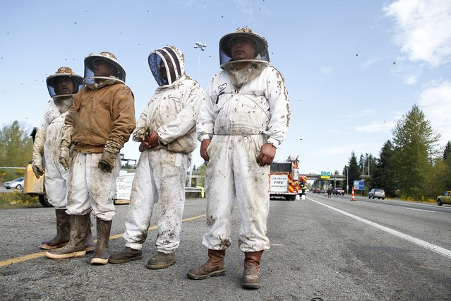 Beekeepers wait to start clearing out the scene of semi-trailer truck that overturned with a cargo of bees on a highway in Lynnwood, Washington April 17, 2015. A truck carrying millions of honey bees overturned on a freeway north of Seattle on Friday, creating a massive traffic jam as the swarming insects stung firefighters, officials said. (Photo by Ian Terry/Reuters)