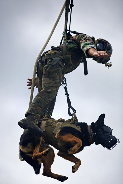 A U.S. Marine and his multipurpose canine, both with Marine Raider Regiment, hang from a UH-1Y Huey assigned to Marine Light Attack Helicopter Squadron (HMLA) 167, during special patrol insertion/extraction training at Stone Bay, Camp Lejeune, N.C., September 23, 2015. (Photo by Lance Cpl. Austin A. Lewis/U.S. Marine Corps)
