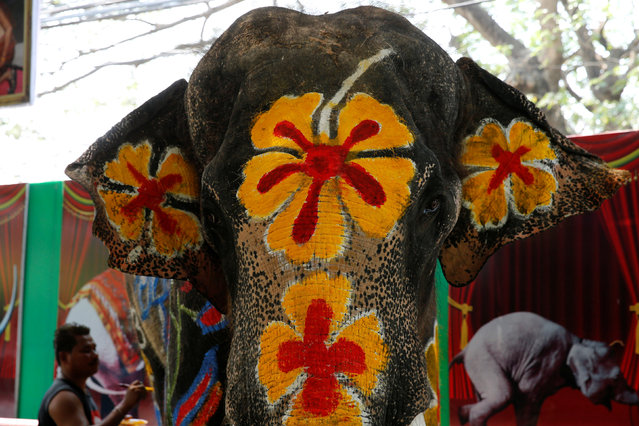 Mahouts paint an elephant ahead of the celebration of the Songkran water festival in Thailand's Ayutthaya province, north of Bangkok, April 11, 2016. (Photo by Jorge Silva/Reuters)