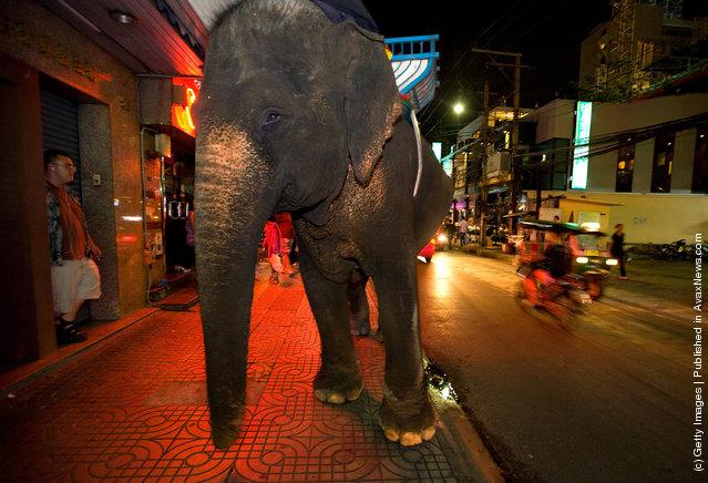 Urban Elephants Roam The Streets of Bangkok